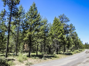 16+ acres of level, well-treed land
