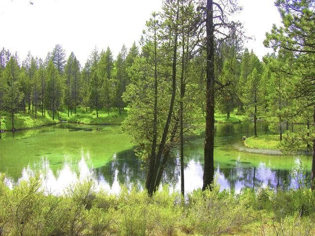 Wonderful Half-Acre Home Site on Spring River Lake – Sunriver!
